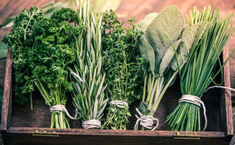 Как хранить зелень?