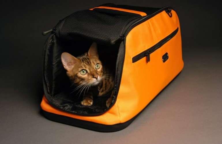 В чем лучше перевозить кошку? Выбор комфортной переноски.