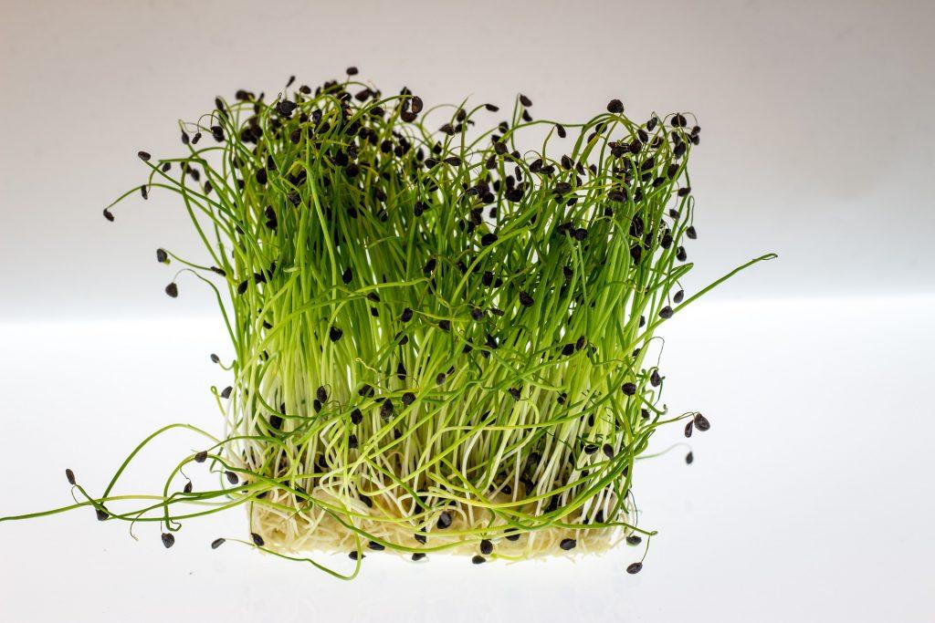 Микрозелень в домашних условиях без земли